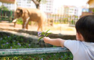 動物園 バス遠足 子供 保育園