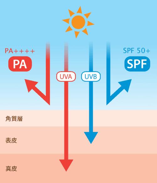 SPF PA 紫外線